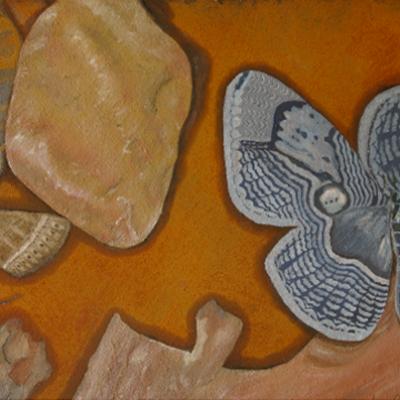 Owl Moth among Stones (Framed) - 430 cm x 500 cm R1295.00