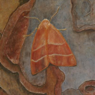 Magnificent Moth (Framed) - 730 cm x 550 cm R1975.00